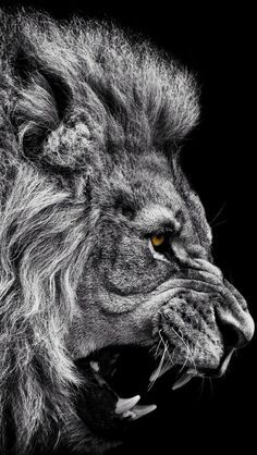The first time HE came, He came as the Lamb of Glory, the Suffering Servant. This time, HE WILL COME AS THE LION OF THE TRIBE OF JUDAH! Get ready! Make His highway straight! Smooth out the road's surface. For the KING is Coming!!