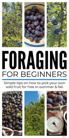Pick Your Own Fruit, Grow Your Own Food, Fruit Picking, Wilderness Survival, Herbal Medicine, Sustainable Living, Natural Living, Plant Based Recipes, How To Run Longer
