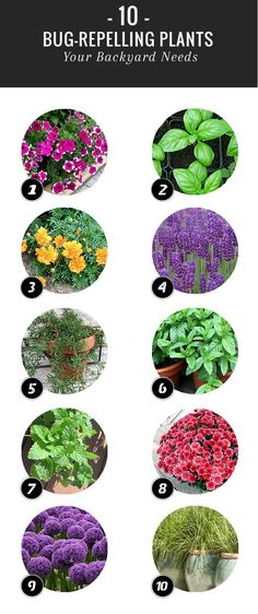 A few strategically placed bug repelling plants will help ward off insects, allowing you to dine al fresco in peace