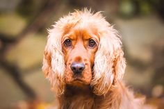 Professional pet photography tips on how to get your dog to look at the camera for that perfect shot...