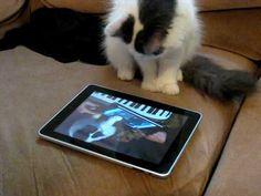 Cats deserve iPad games too