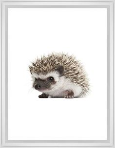 Baby Hedgehog Framed Print, White, Classic, None, White, Single piece, 24 x 36 inches
