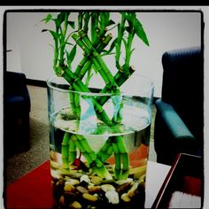 Do it yourself desk beta aquarium... i want to put bamboo in my tank