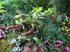 https://flic.kr/p/Gu3LVJ | Orchids, Conservatory Display, Longwood Gardens IMG_8007 | Longwood Gardens, Kennett Square, PA USA Photograph by Roy Kelley Roy and Dolores Kelley Photographs
