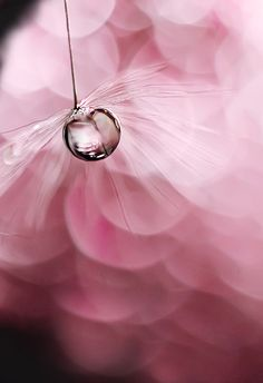 47 best Ideas for photography macro flowers water droplets Dew Drops, Rain Drops, Pink Roses, Pink Flowers, Drip Drop, Bokeh Photography, Spring Photography, White Photography, Minimalist Photography
