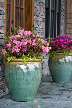 Beautiful azalea in glazed urn. So pretty at the front door,