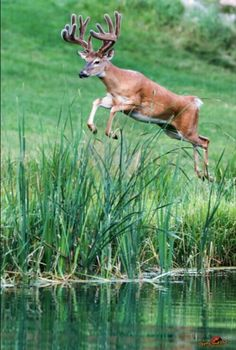 Cool picture...I love deers too:)