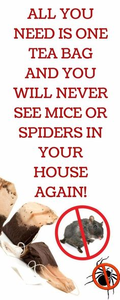 To get rid of spiders