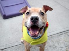 KAHLUA - 20754 - - Brooklyn  TO BE DESTROYED 03/01/18 *PUBLICLY ADOPTABLE* -  Click for info & Current Status: http://nycdogs.urgentpodr.org/kahlua-20754/