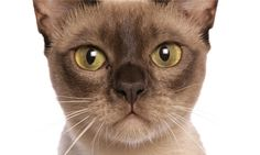 Are you stressing out your cat? How to spot the signs.