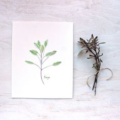 Herb Watercolor Print - Sage