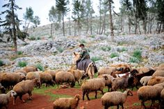 Bulent Kilic - AFP/Getty Images:  March 19, 2013. A Syrian shepherd cares for his flock near the ruins of the ancient Roman city of of Serjilla, in the northwestern province of Idlib.