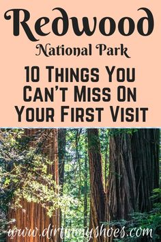 10 Things You Can't Miss On Your First Visit to the Redwoods - Redwood National Park is one of the most beautiful places in California, and should be on everybody - California National Parks, California Vacation, Us National Parks, Northern California Travel, Klamath California, Ontario California, South California, California Mountains, California Closets
