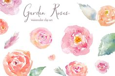 Garden Roses Watercolor Clip Art by Angie Makes on Creative Market