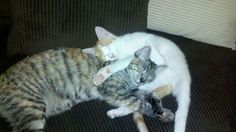 TOP 38 Funny Cats and Kittens Pictures - …