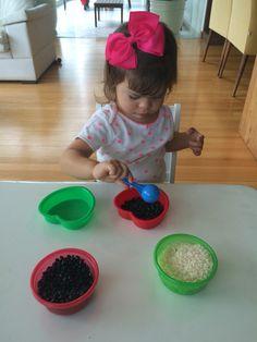 Transferência de grãos para os potinhos da mesma cor. Atividade montessoriana.