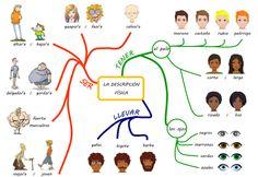 Les quichotteries de Delphine: Mapa Mental Descripción física