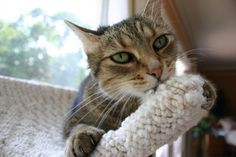 Wool sucking behavior in cats and how to control it