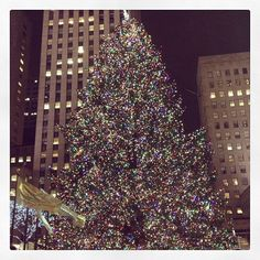 Legendary NYC Christmas Tree in Rockefeller Center.