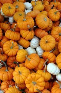 Small Pumpkin Decorating Ideas