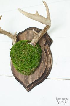 This moss covered deer antler mount is a fun take on a traditional decor piece. The texture and pop of color that the moss adds makes this a fun statement piece for any home!