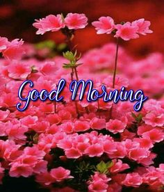 Beautiful good morning images with flowers Good Morning Massage, Good Morning Coffee, Good Morning Good Night, Good Afternoon, Good Morning Wishes, Good Morning Quotes, Good Morning Beautiful Pictures, Good Morning Images Flowers, Rain Street