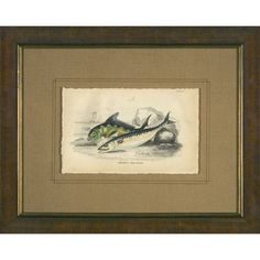 Phoenix Galleries Mackerel Framed Print - HP896