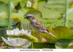 Little one curious bird on a water lily