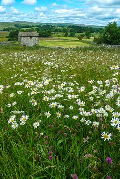 wanderthewood: Barn near Linton, Yorkshire, England by Eeee Bi Gum on Flickr — FUCKITANDMOVETOBRITAIN