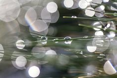 TauWetterStimmung - Makrofotografie - MakroMontag - glasklar+kunterbunt