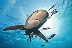 Shark - Awesome Examples Of Under Water Photography