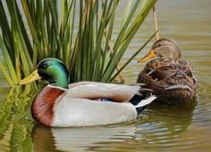 Resting Mallards 9.75x12, painting by artist George Lockwood