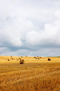 Foto: Felder & Wiesen - Straw bales in field with stormy sky