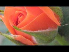 """""""Gracias A La Vida""""  -  ( Maria Dolores Pradera )"""