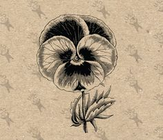 Retro drawing vintage image Pansy Flower Instant Download Digital printable Black and White  clipart graphic -  burlap, iron on etc HQ300dpi by UnoPrint on Etsy
