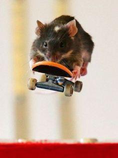Táto myš vie jazdiť na skateboarde
