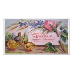 Vintage Medicine Poster  A very pretty and colorful poster for Dr. Grosvenor's Liveraid. Depicting flowers and baby chicks, this po...
