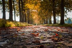 Automne by Fabrice Hendrickx on 500px