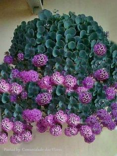 I need to find out what is the name of this plant