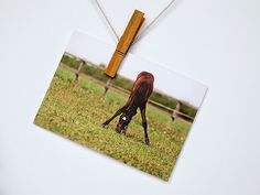 Greeting Card Horse foal pasture green summer stationery for her for him animals blank