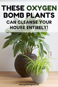 These Oxygen Bomb Plants Can Help Cleanse Your House Entirely! Best Indoor Plants, Indoor Garden, Garden Plants, House Plants Decor, Plant Decor, Household Plants, Inside Plants, Natural Homes, Paludarium