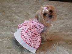 Hey, I found this really awesome Etsy listing at https://www.etsy.com/listing/173798602/dog-dress-with-sweet-hearts-overskirt
