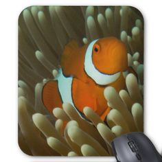 Everyone loves nemo. This attractive mousepad has a photo of a cute and playful clownfish. This particular clown fish was photographed on Lighthouse Bommie on Australia's Great Barrier Reef.