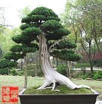 ᴥ֍A little #bonsai inspiration for the day!♥♦       #BonsaiInspiration