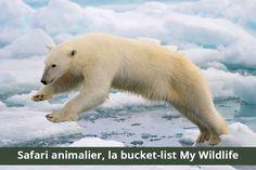 Découvre la bucket-list My Wildlife pour les safaris animaliers. De l'Antarctique à l'Afrique, des Galapagos à l'Europe. Viva les rêves !