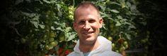 Tomatentelers in het Westland en Middenmeer