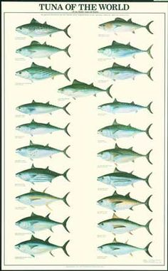 Tuna Fish Chart by Artist Ron Pittard, $19.95.