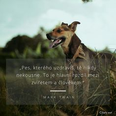 Dog Quotes, Wise Quotes, Mark Twain, Good Thoughts, New Life, Motto, Karma, Texts, Jokes