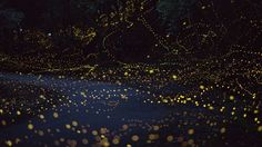 long-exposure-photos-of-fireflies-at-night-tsuneaki-hiramatsu-9.jpg