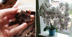 Vyhadzujete použitú kávu alebo cibuľové šupky? Toto je zoznam TOP prírodných hnojív, vďaka ktorým vaše rastliny zakvitnú ako nikdy